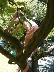 grimper aux arbres 2