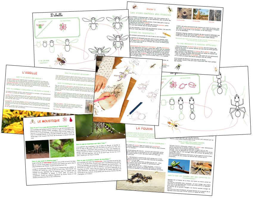 ateliers-insectes-apprentissages-autonomes
