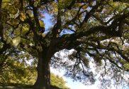 arbre-de-lenfance
